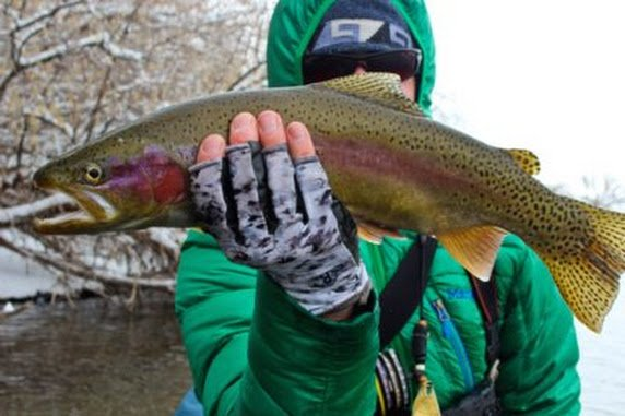 February on the bighorn river wy dunoir fishing adventures for Bighorn river fly fishing