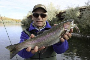 Bighorn River Rainbow with a mouthful