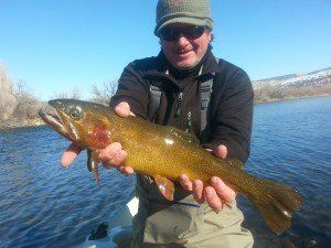 Winter Cutthroat Trout Bighorn River
