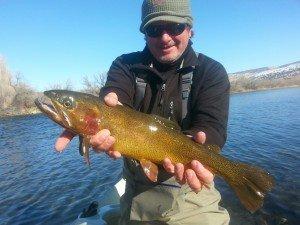 Winter Cutthroat Trout Bighorn River