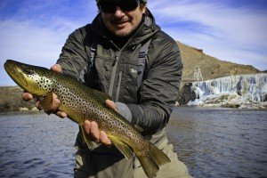 Bighorn River Brown Trout