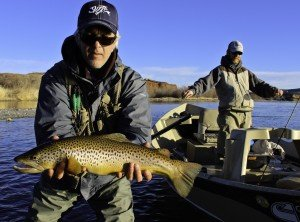 Bighorn River Spring Brown Trout