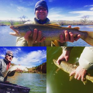 Bighorn green river fishing report spring water flows for Green top fishing report