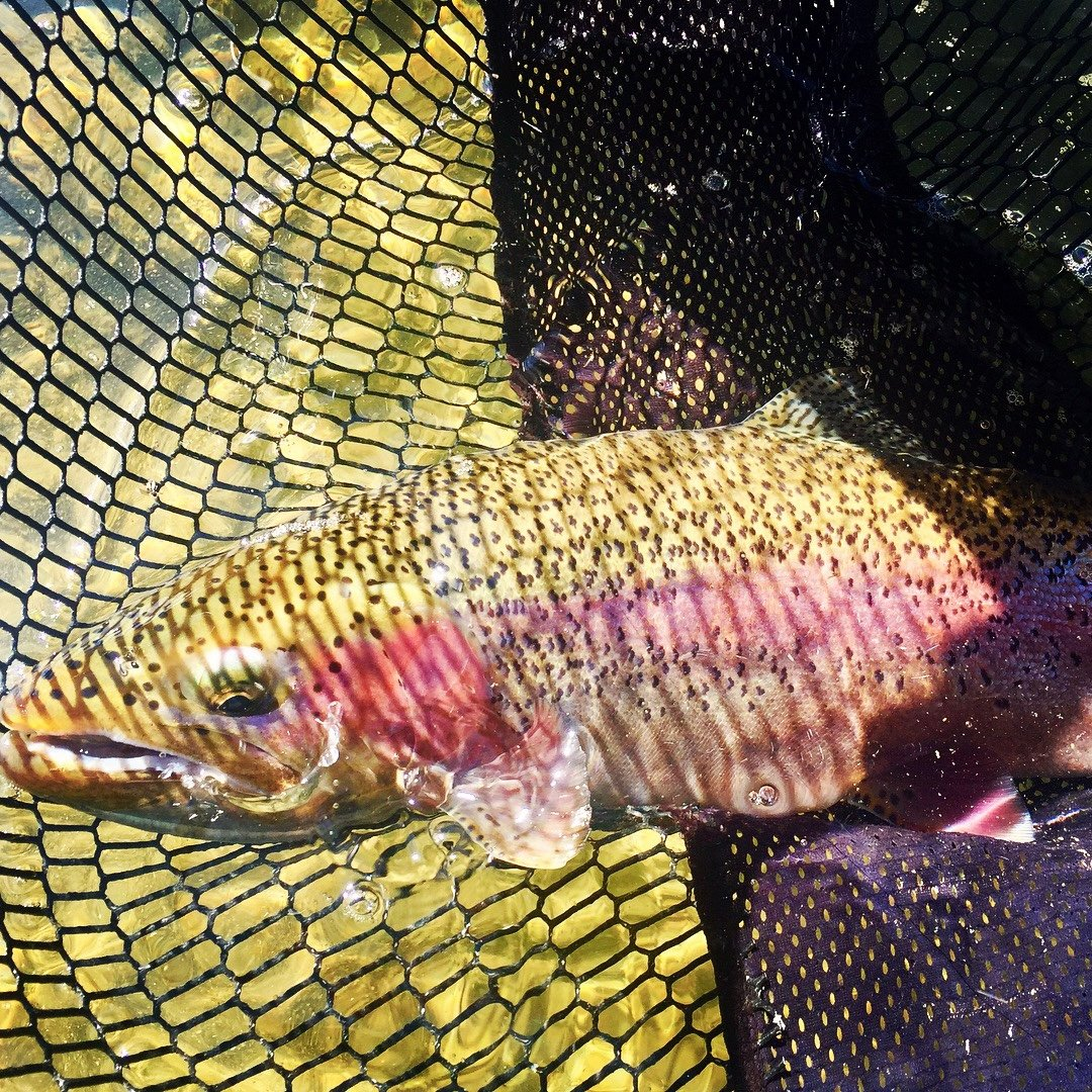 Sustianable Consumer Guide Fishing: Green River Fishing Report Fontenelle, Wyoming: Dunoir