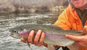 bighorn river fishing report thermopolis wyoming