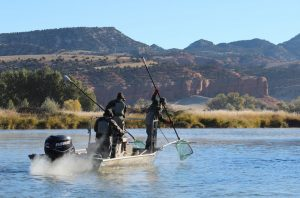 Bighorn River Wyoming Fish Count for 2018