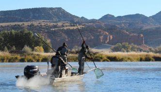 Wyoming Fish Counts