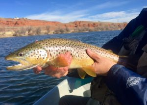 Bighorn River Fishing Wyoming Guides