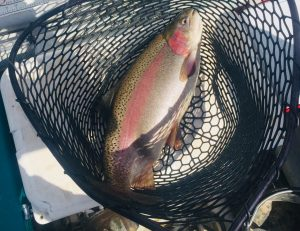 Wyoming Fly Fishing Trophy Trout 2019