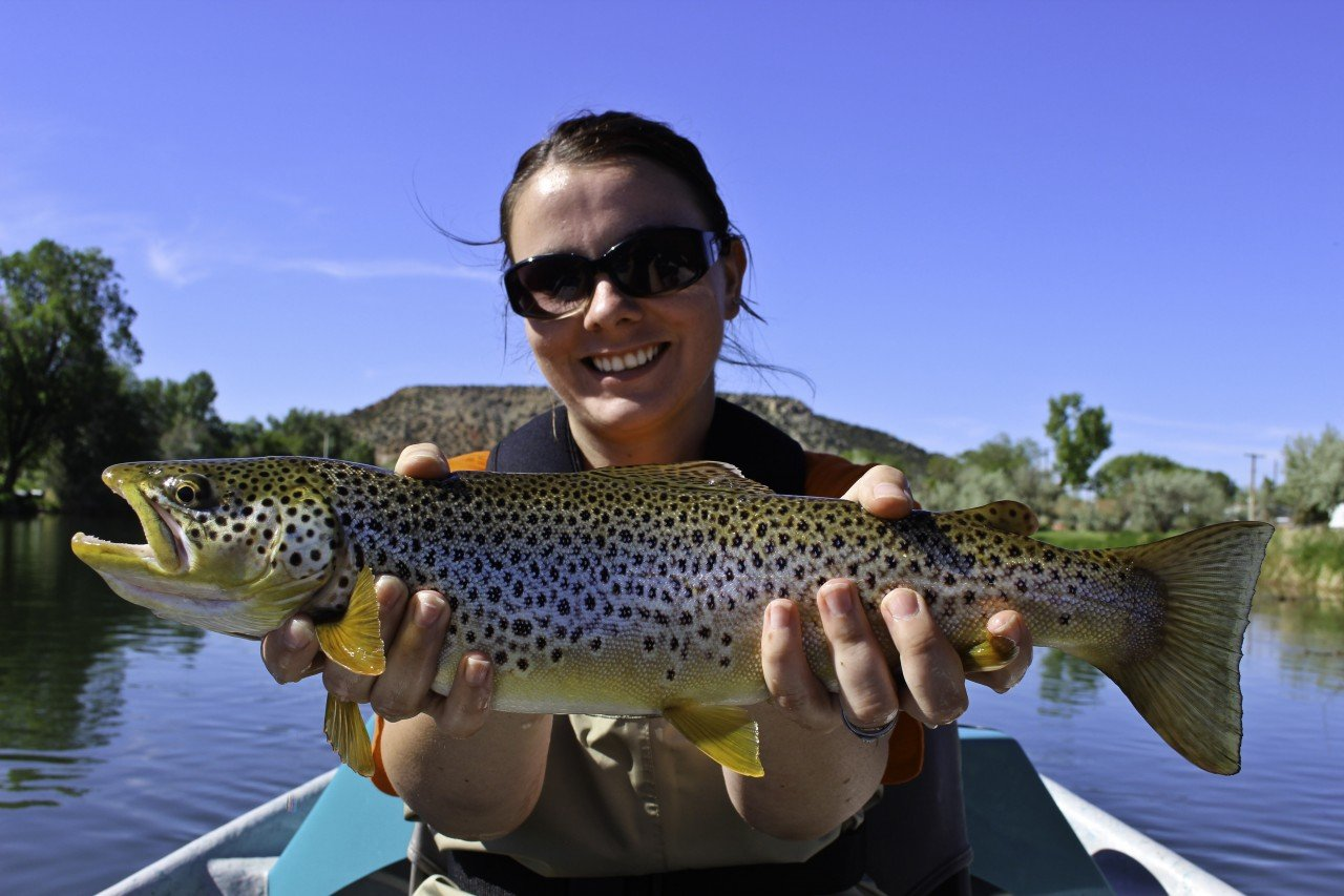 bighorn_river_brown_trout_wyoming_fly_fishing_1_20130827_1877214527