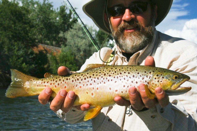 brown_trout_20110501_1345119755