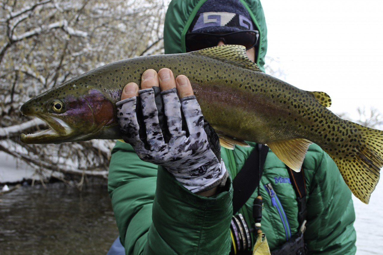 winter_rainbows_thermopolis_fly_fishing_1_20130827_1624956835